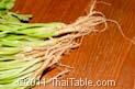 cilantro roots