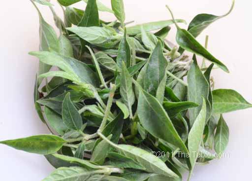 chili leaves