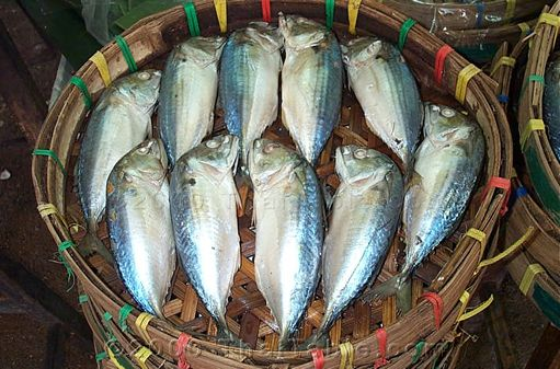 thai mackerel
